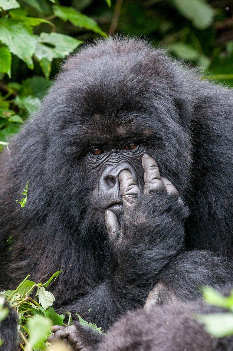 El podio lo completó Oliver Dreike con esta simpática escena de un gorila