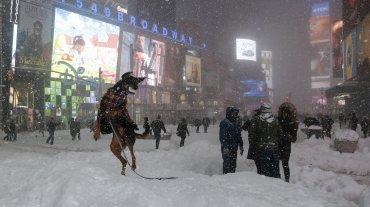 Un perro juega en el Times Square, Manhattan