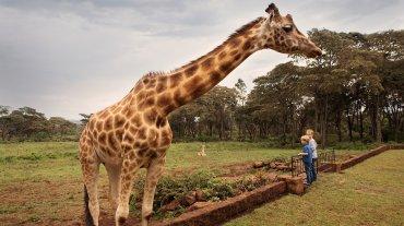 El Giraffe Manor cuenta tan solo con seis habitaciones