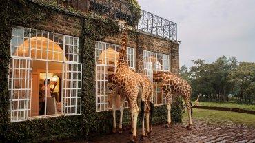 En este hotel, las jirafas conviven con los visitantes