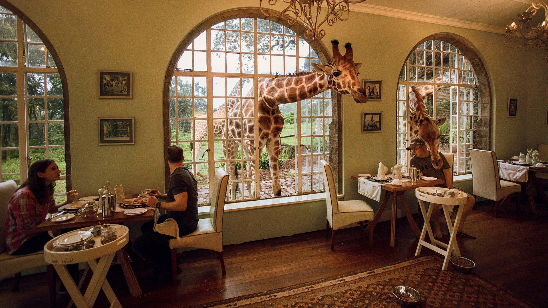 El pequeño y exclusivo hotel es famoso por sus habitantes algo  peculiares, las jirafas