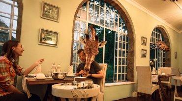 El hotel está ubicado en Langata, cerca de la capital del país, Nairobi