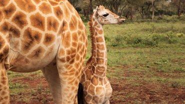 Una parte de los ingresos por alojamiento  son destinados al Fondo Africano para la Protección de Especies  Protegidas, creado por los antiguos dueños del establecimiento