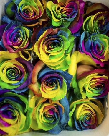 Originales rosas multicolores para regalar en el Día de los Enamorados en Austria.