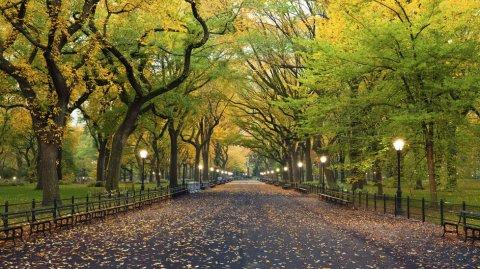 No hay nada más icónico de Nueva York que una caminata por Central Park.