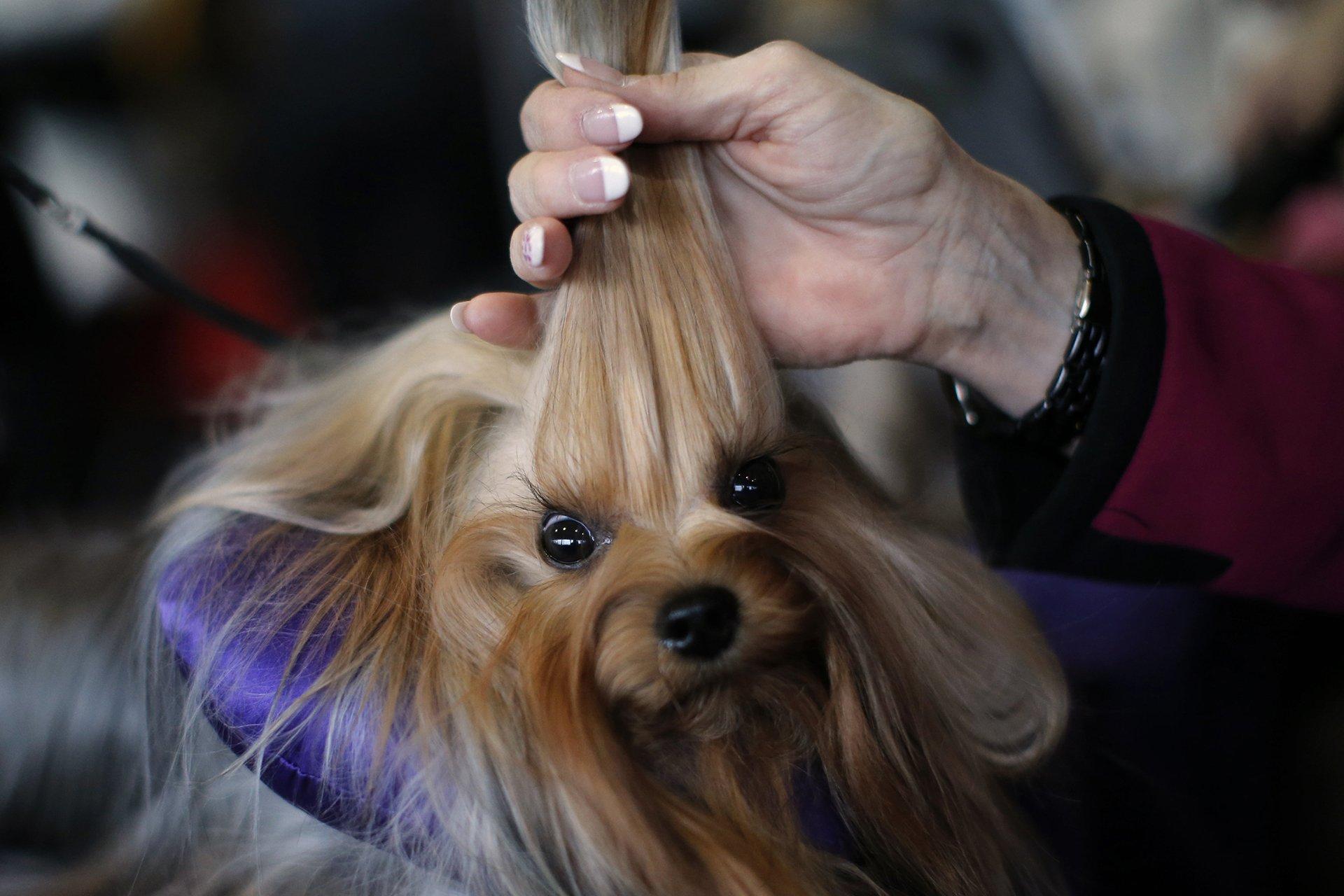 La exhibición, que se desarrolló los días 15 y 16 de febrero, reunió a 2.711 perros en diferentes categorías