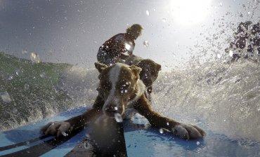 Aboitiz viaja por la costa este de Australia con sus cuatro perros, para enseñar un a relación disciplinada de las mascotas
