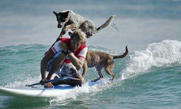 Aboitiz Chris dirige a Rama y Millie, dos perros de rescate que realizan trucos en la tabla de surf