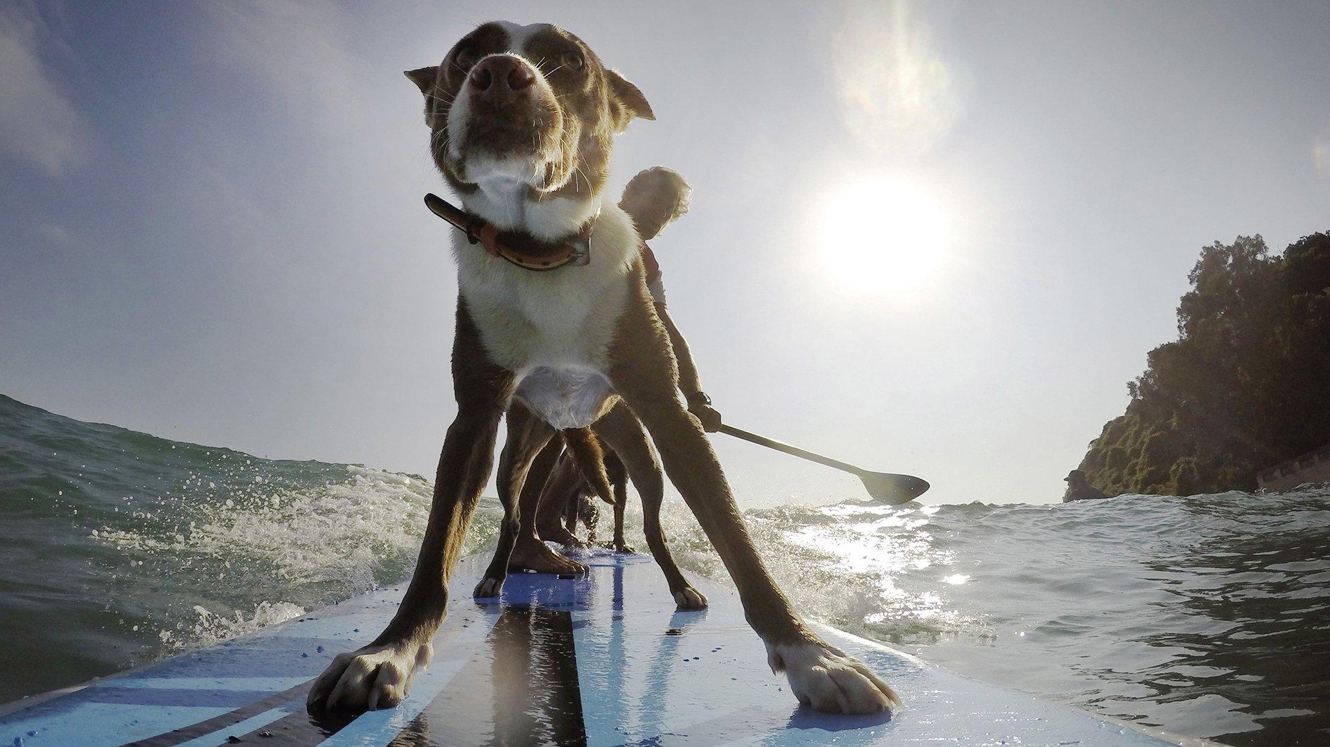 Un entrenador de perros australiano y ex campeón de surf usa esa  disciplina para enseñanzar a los animales a construir relaciones  saludables con el hombre