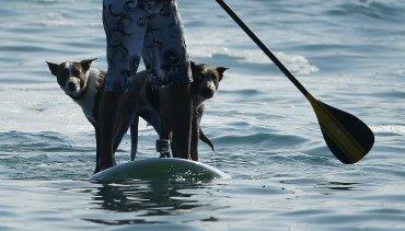 El surf no solo sirve para entrenar a los perros, sino que se trata de entenderlos y aprender a convivir , dijo Aboitiz