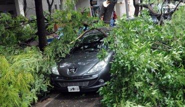 Los árboles caídos produjeron destrozos en Rosario
