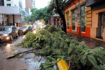 Árboles caídos y calles anegadas en Rosario