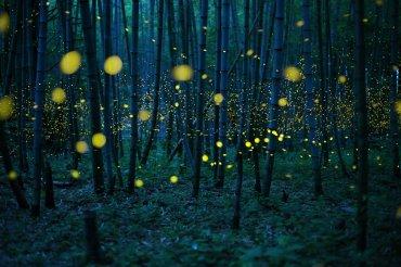 Bosque encantado de bambú
