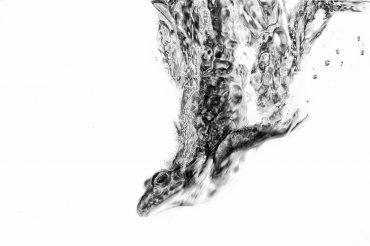 La rana buzo