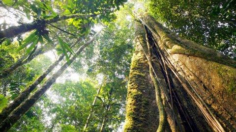 La selva amazónica fue declarada como una de las siete maravillas naturales.