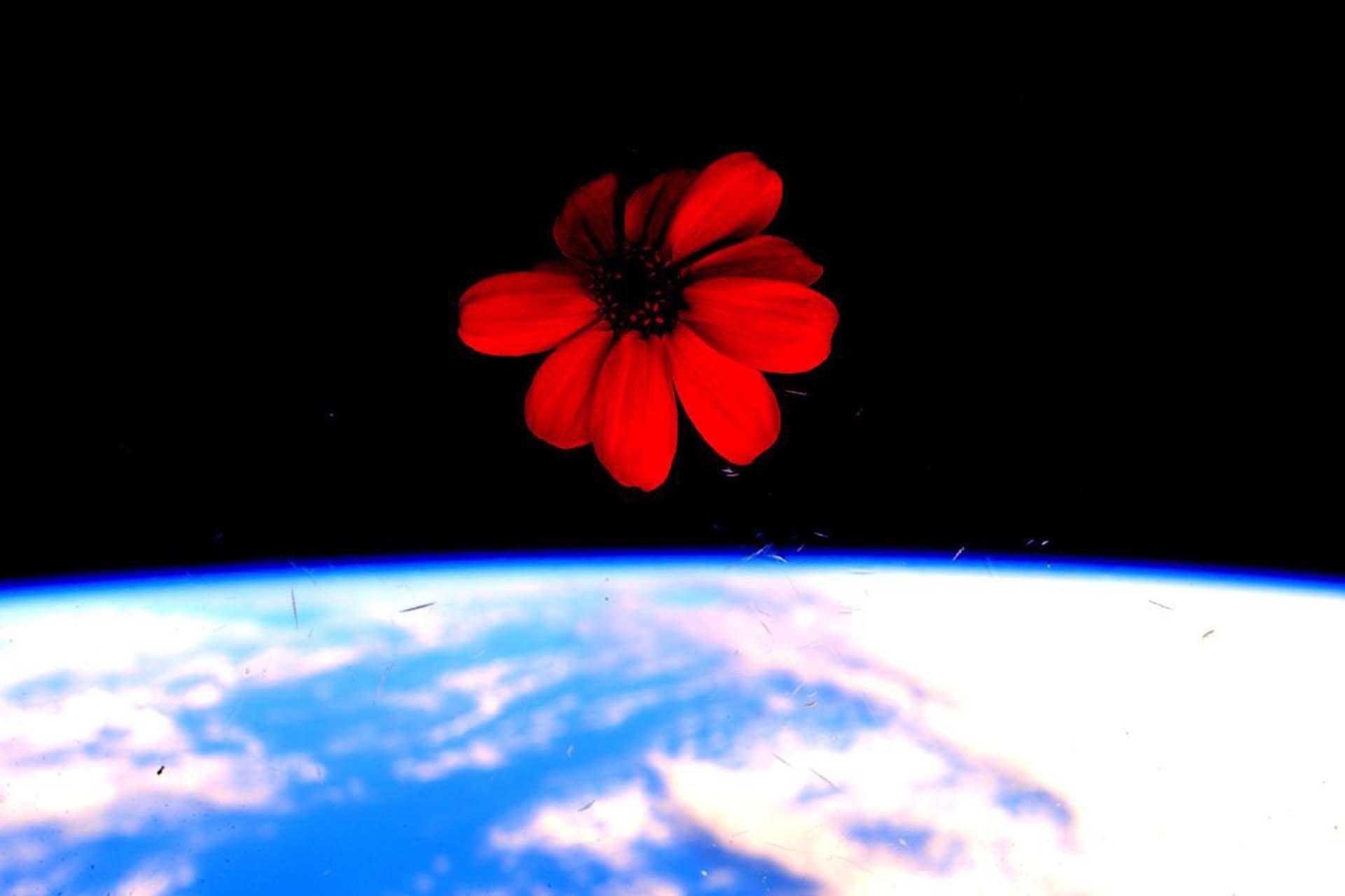 Después de 340 días, más de 5,000 viajes alrededor de la Tierra, y casi 200 galones de agua potable obtenida reciclando sudor y orina, el astronauta estadounidense Scott Kelly y el cosmonauta ruso Mikhail Korniyenko regresaron a la Tierra este miércoles concluyendo así su triunfal#YearInSpace(Año en el Espacio). Una misión que será recordada durante mucho tiempo por su audacia, y por las fotografías deslumbrantes que produjo Kelly.