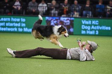 Crufts es la exposición canina de mayor prestigio en el mundo