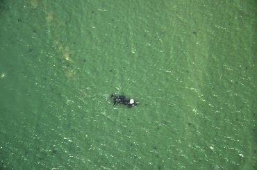 Entre el mes de mayo y los primeros días de noviembre, centenares de ballenas francas llegan hasta la costa de Puerto Madryn para aparearse y reproducirse, algunas ya con sus crías.