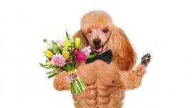 Un perro, una manera efectiva de ganar una cita
